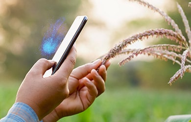 Digital-Farming-in-Middle-East-Path-to-Agriculture-4-0-and-Food-Safety | FarmERP