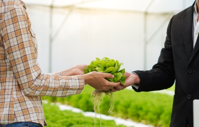 Contract Farming 4 Ways to Facilitate Management and Smallholder Participation | FarmERP
