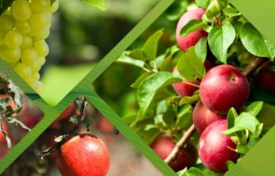 Export quality fruit farming with data science | FarmERP