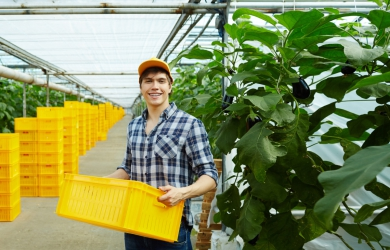 How Food Traceability can Empower Agricultural Supply Chain with Technology | FarmERP