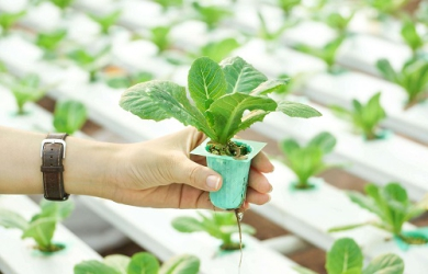 Run your Next gen Hydroponics and Vertical Farming Agribusiness with the future-ready FarmERP Platform | FarmERP