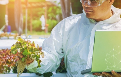 Using Information and Technology in Hydroponics Farming | FarmERP