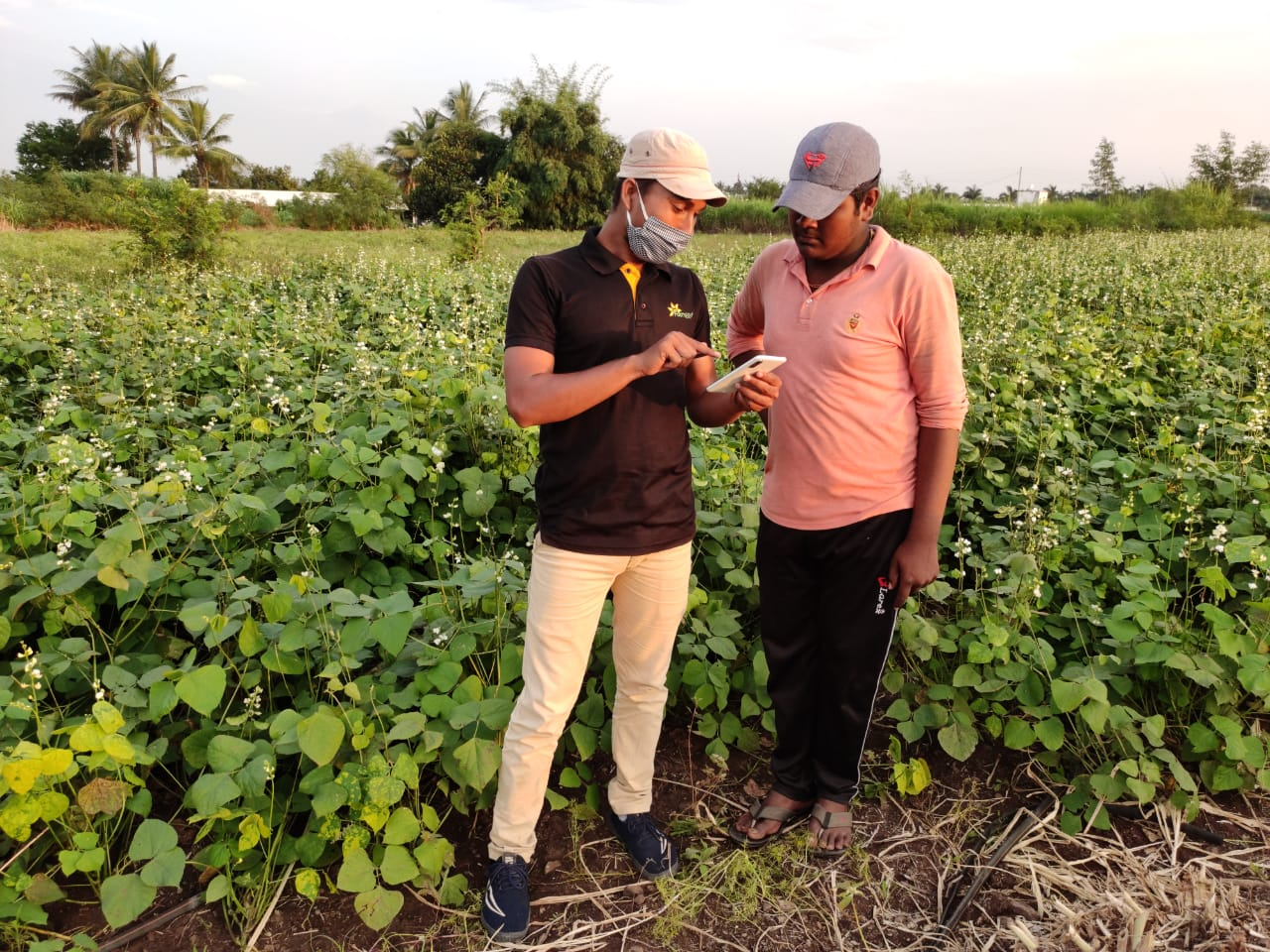uberization-of-agriculture-a-game-changing-project-for-smallholder-vegetable-growers | FarmERP