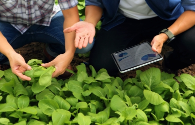 SaaS-based Agriculture Reinforcing Smart Farming Tools and Strategies | FarmERP